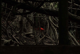 floresta-encatada-15-.jpg
