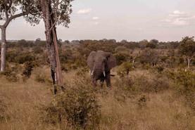 Elefante-Kruger-6-.jpg