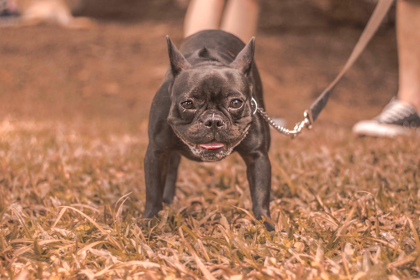 Cachorros Diversos por Gabriela Delcin P