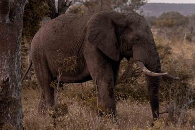 Elefante-Kruger-8-.jpg