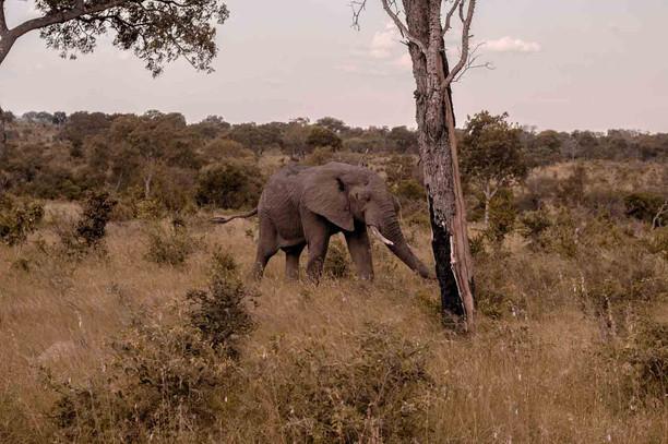 Elefante-Kruger-3-.jpg