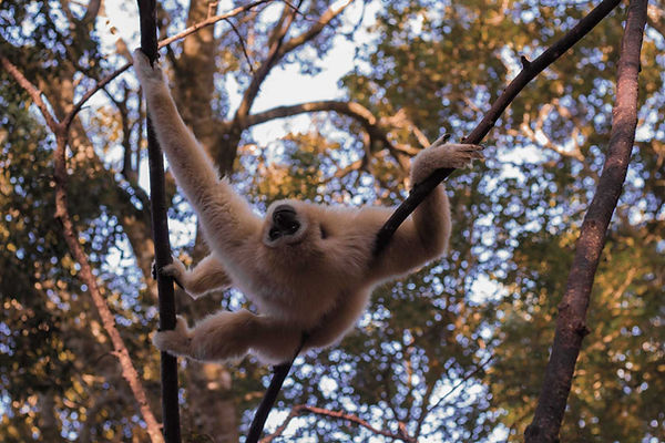 macaco-branco-4.jpg
