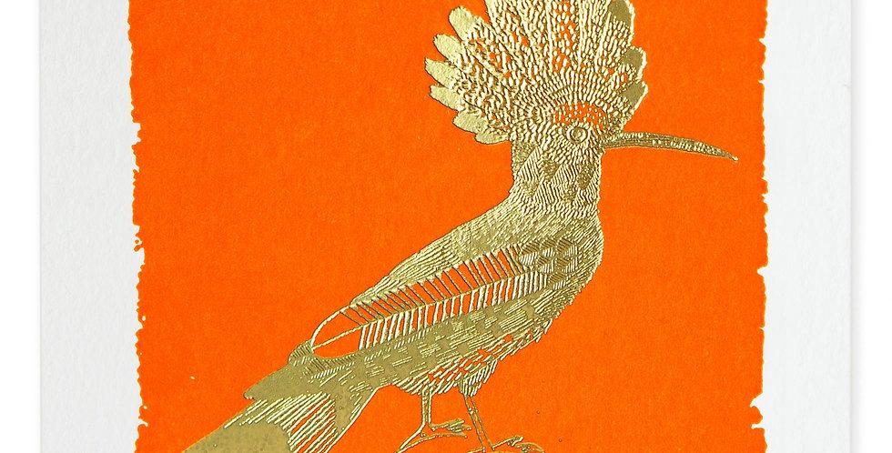 Orange Hoopoe Note Card