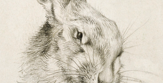 Hare Natural History Museum Card