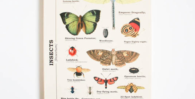 Insect Notebook
