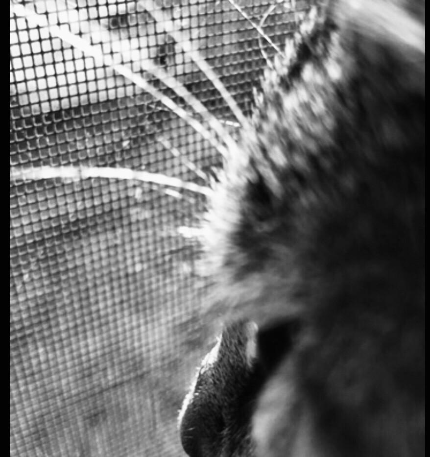 S.A.D Cat