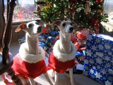 Phoebe & Grace - Merry Christmas!