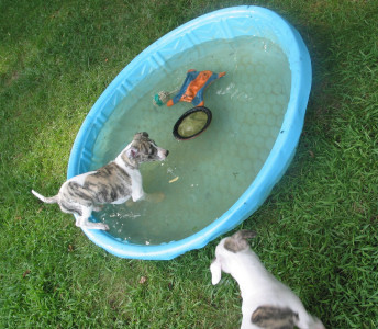 Dominick x Cali Litter in the pool