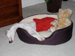 Phoebe sleeping comfortably