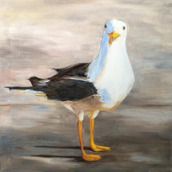 Gull on Shoreline