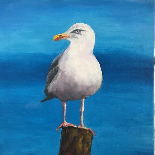 Jersey Gull