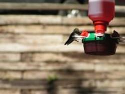 Camp Scenery - Hummingbirds