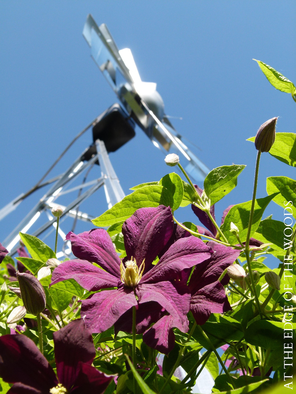 clematis twines its way up the windmill as a trellis