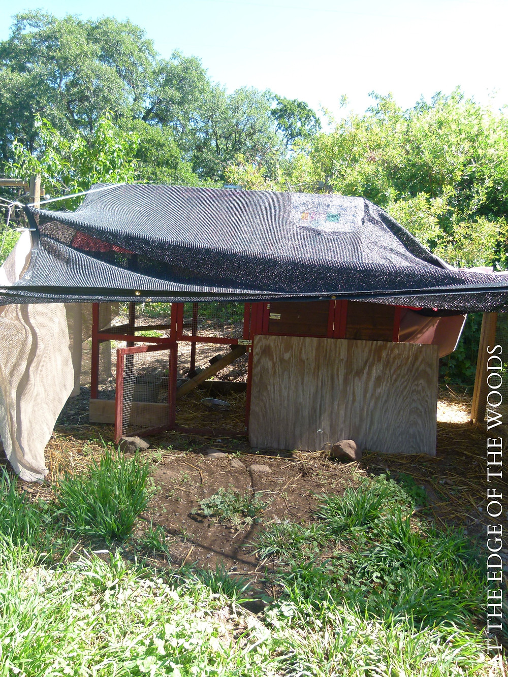 the shade cloths we have rigged up to keep the brooder cool