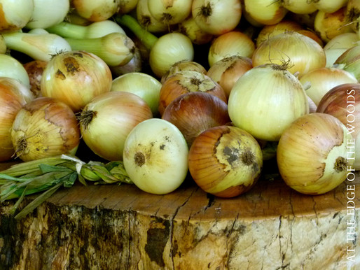 Growing Onions from Seed