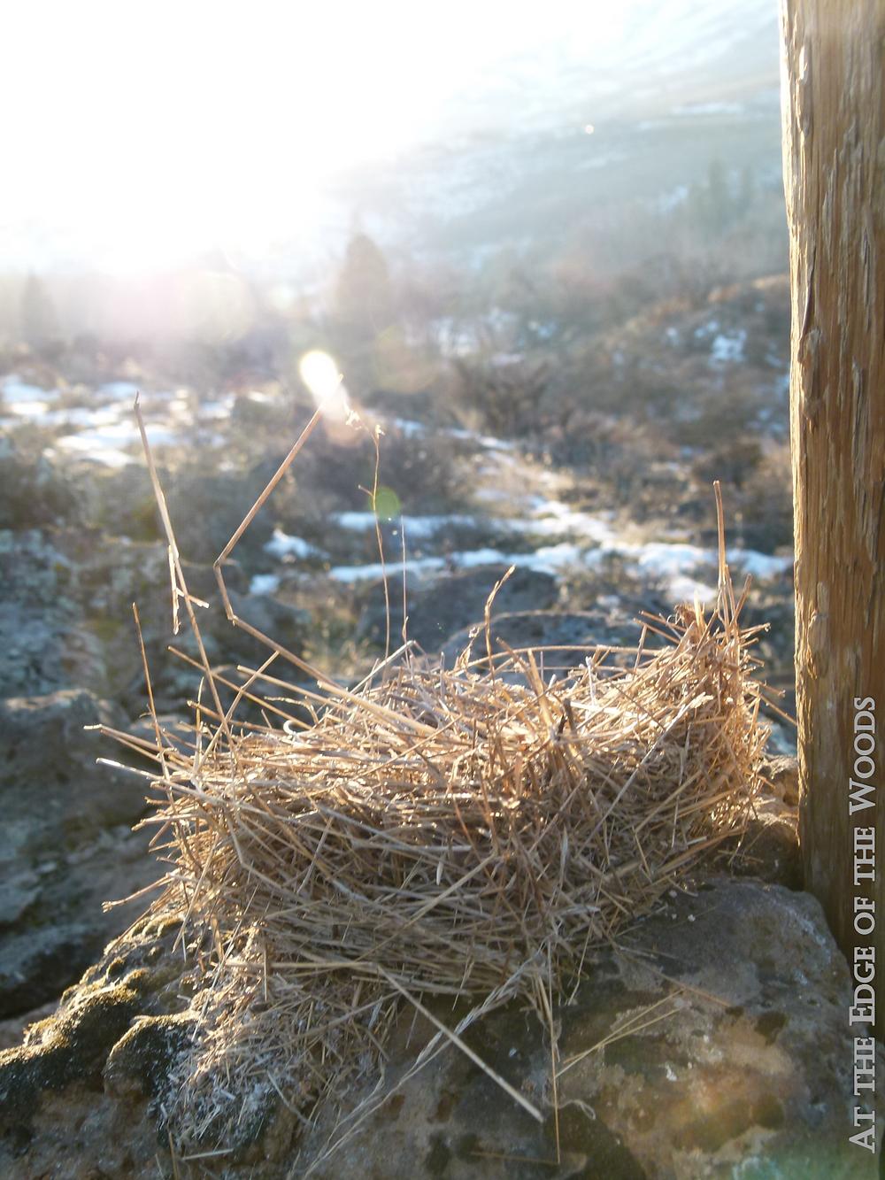 the sun sets on our last nest box