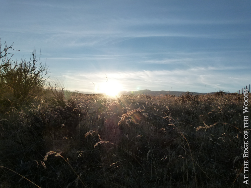 the sun shines through the dry grasses