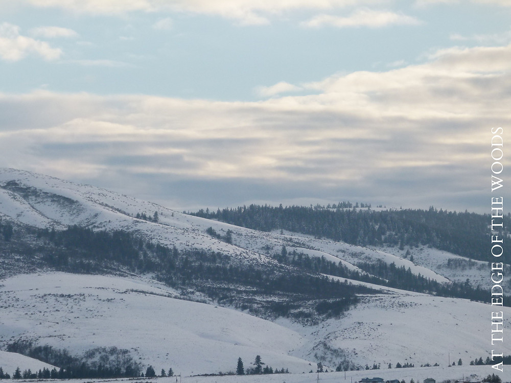 snow on the hills and pine trees