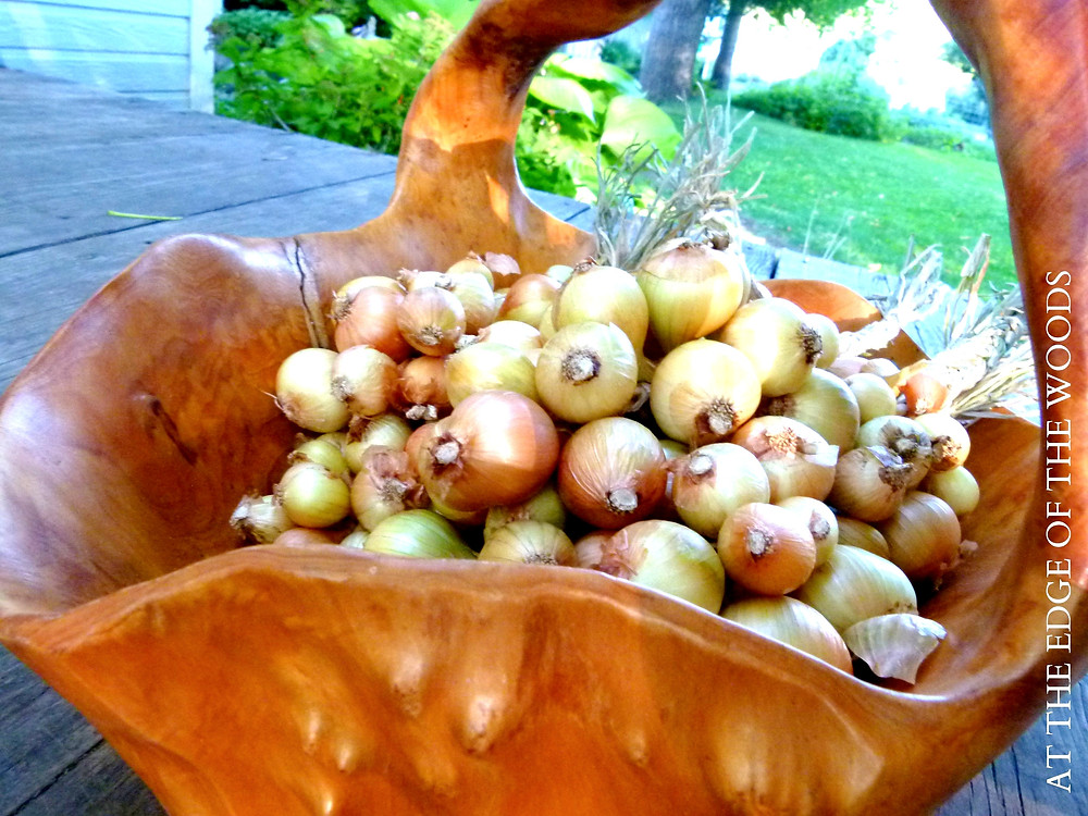 braids of shallots in a basket