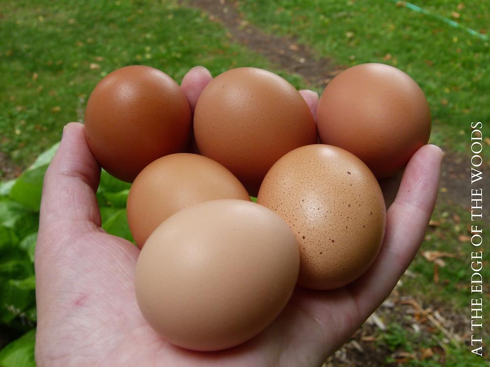 shades of brown chicken eggs