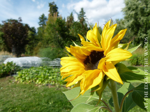 Planning Your Garden, Part II: Where?