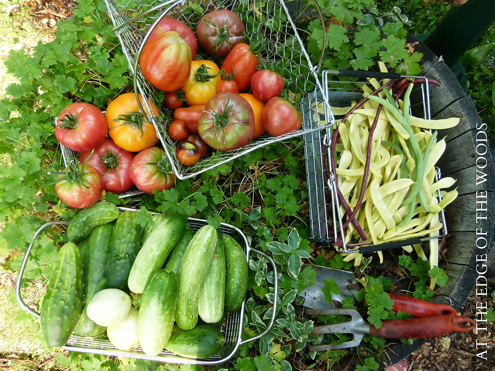 baskets of tomatoes, cucumbers, and beans