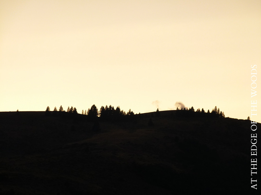 trees silhouetted on the top of the ridge