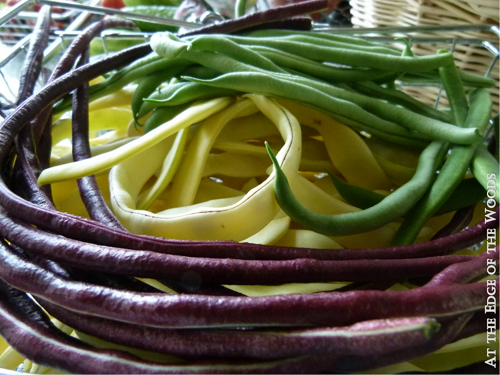 Golden Gate, Fortex, and Red Noodle Yard Long beans