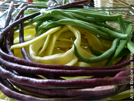 Bountiful Beans, Part II: Common Beans