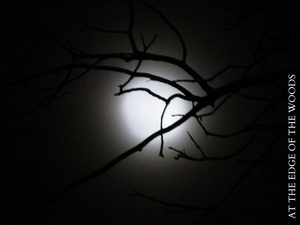 the moon shining though branches