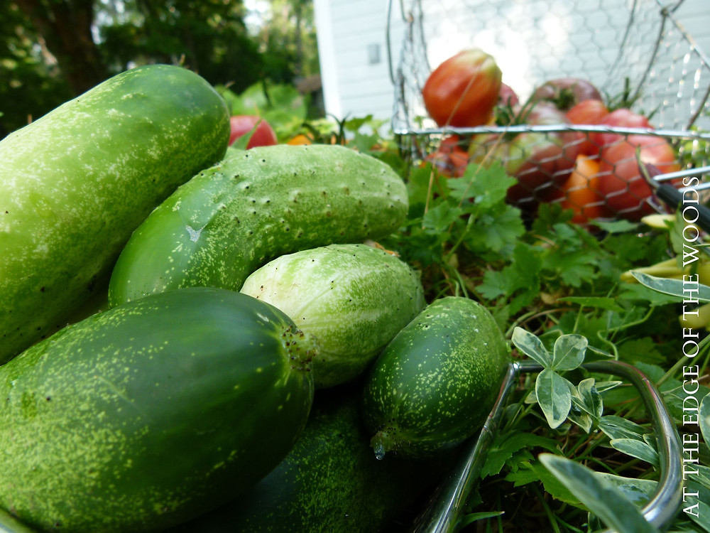 cucumbers and tomatoes in baskets