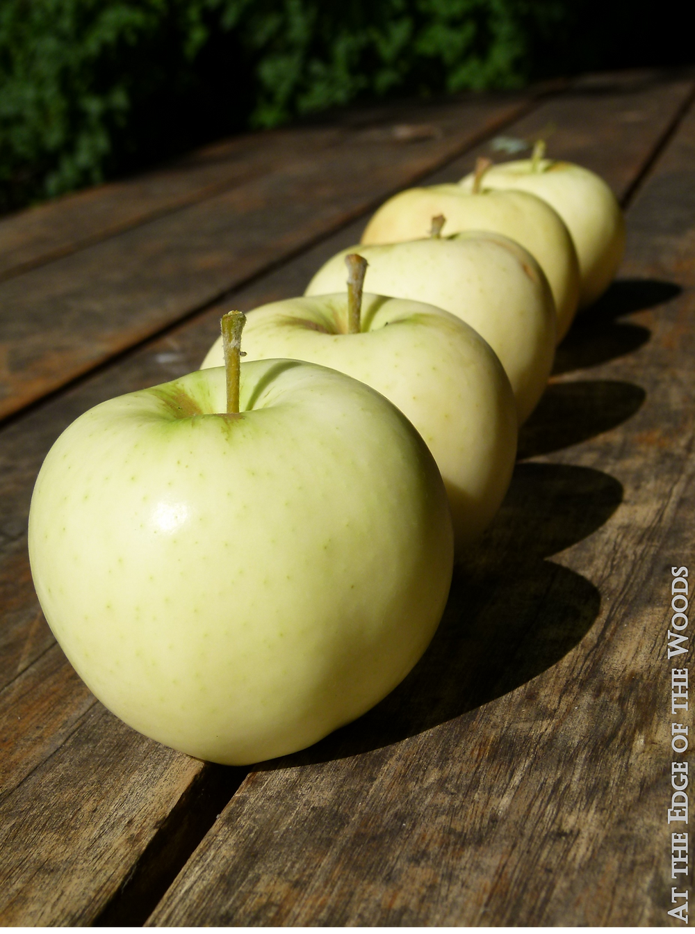 Yellow Transparent Apples