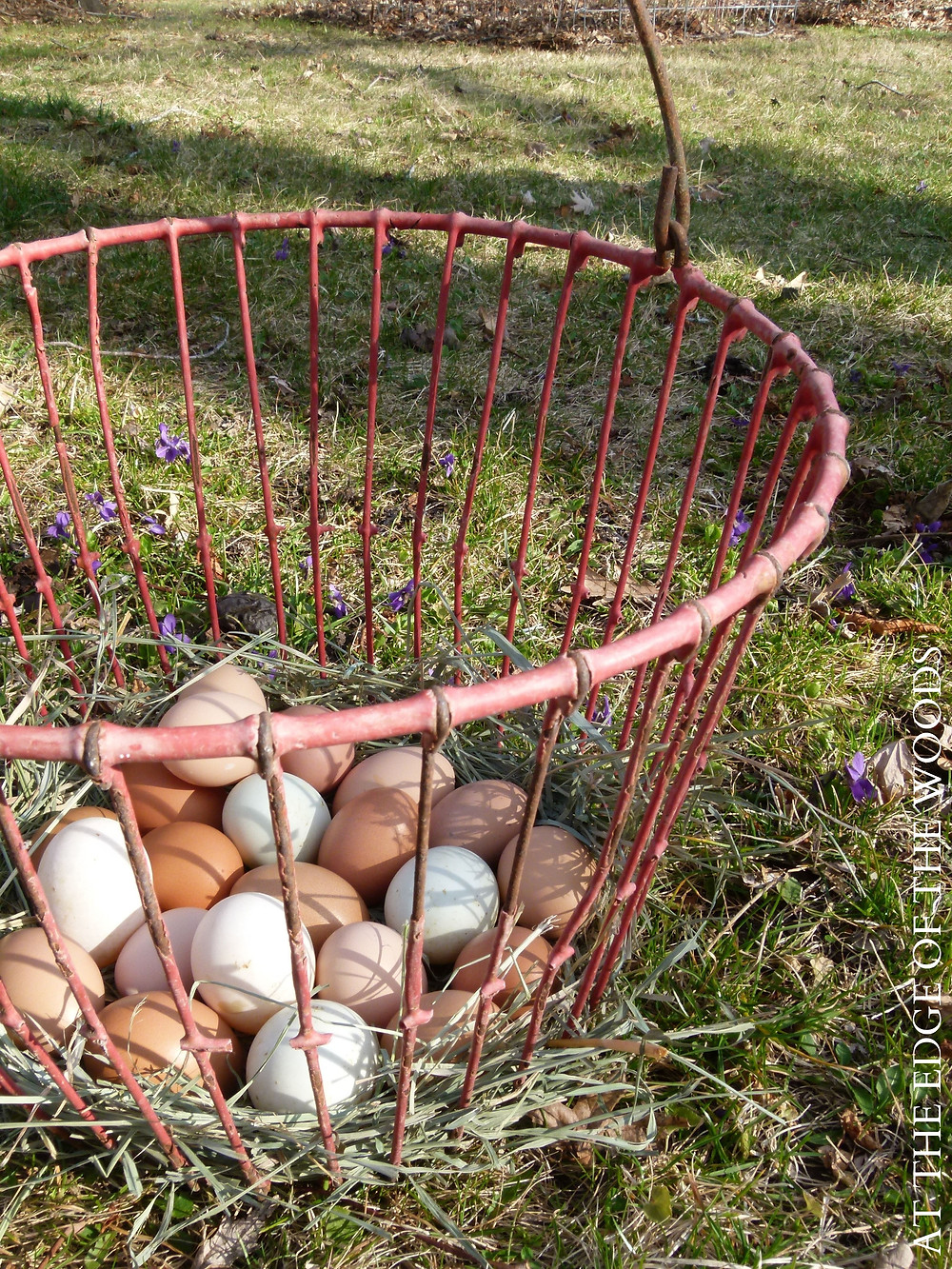 chicken and duck eggs in an antique basket