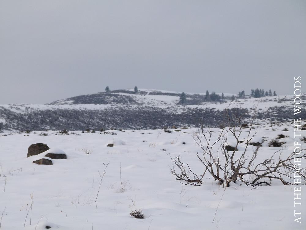 snow on hills, sagebrush, and basalt boulders
