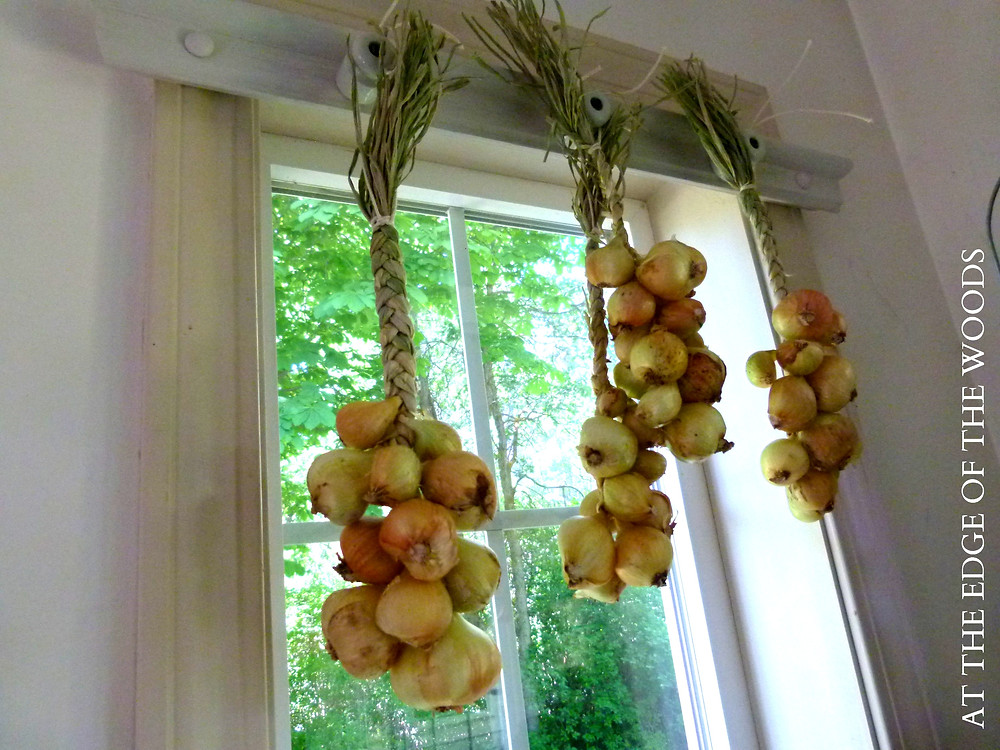braids of Dutch Yellow shallots hanging in the sunroom
