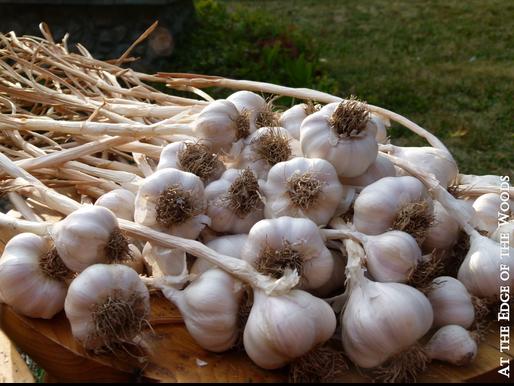 Generosity, Gratitude, Garlic