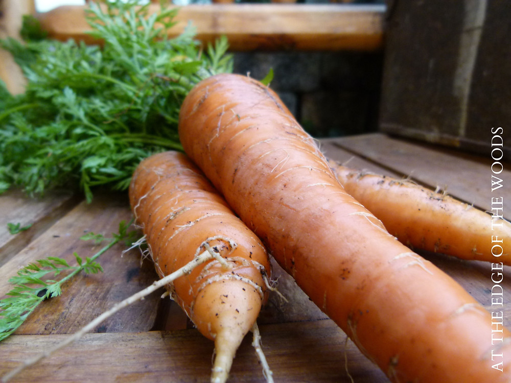 carrots on a wooden bench