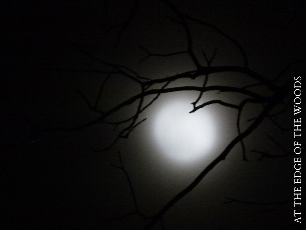 the moon shining through haze and branches