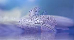 次の花.jpg