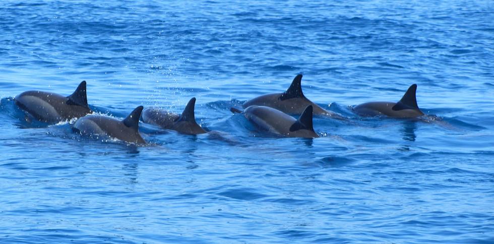 banc-de-dauphins-Grand-Baie-ile-Maurice