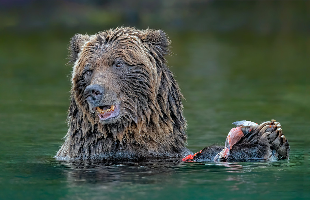 NF-NA-Rob Parker-Grizzly.jpg