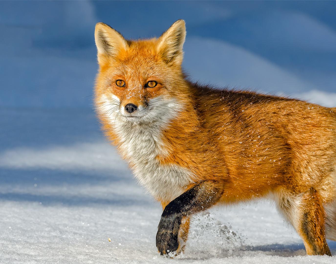 NF-NA-Rob Parker-Fox Trot.jpg