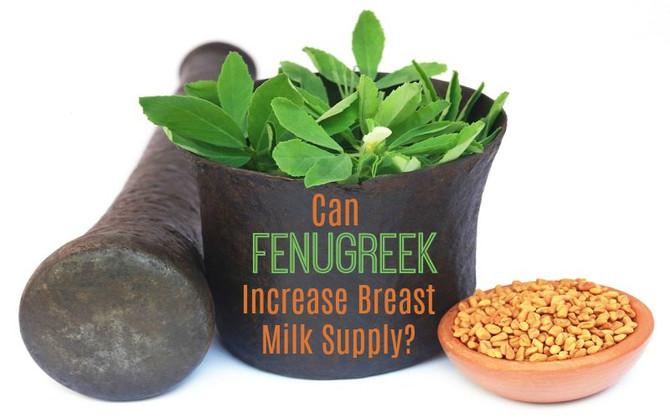 Fenugreek for Milk Supply - thyroid warning