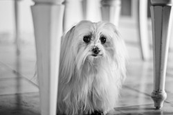 Dog Day 818_edit