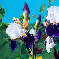 purple irises redone