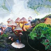 december fungi