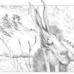 mad hare