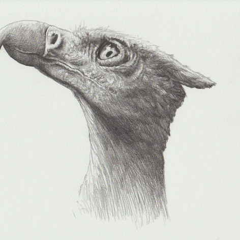gryphon pencil drawing