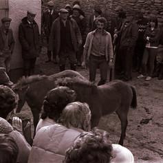 brendon horse fair.jpg