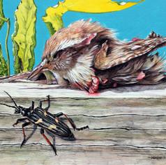 dead wren